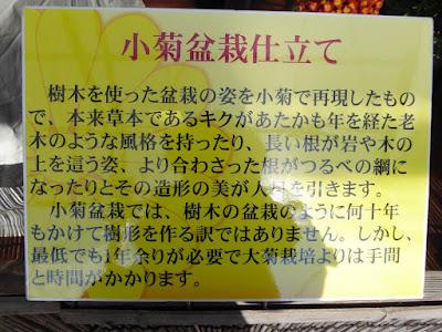 【京都府】京都府立植物園ウォーキング(菊花展)