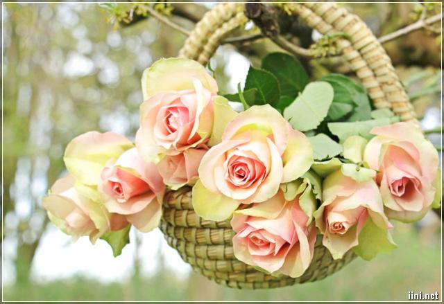 ảnh giỏ hoa hồng đẹp