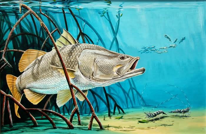 BENIH SIAKAP: Pembekal Benih Ikan Siakap