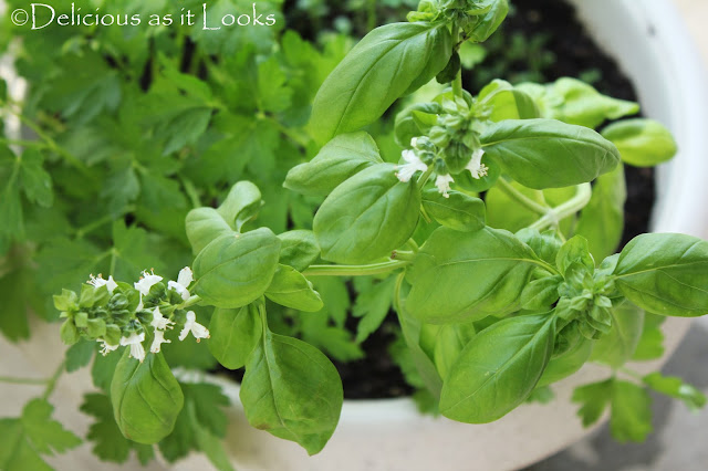 My Growing Herbs  |  Delicious as it Looks