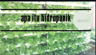 Apa Itu Hidroponik