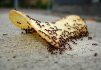 ahuyentar-eliminar- hormigas