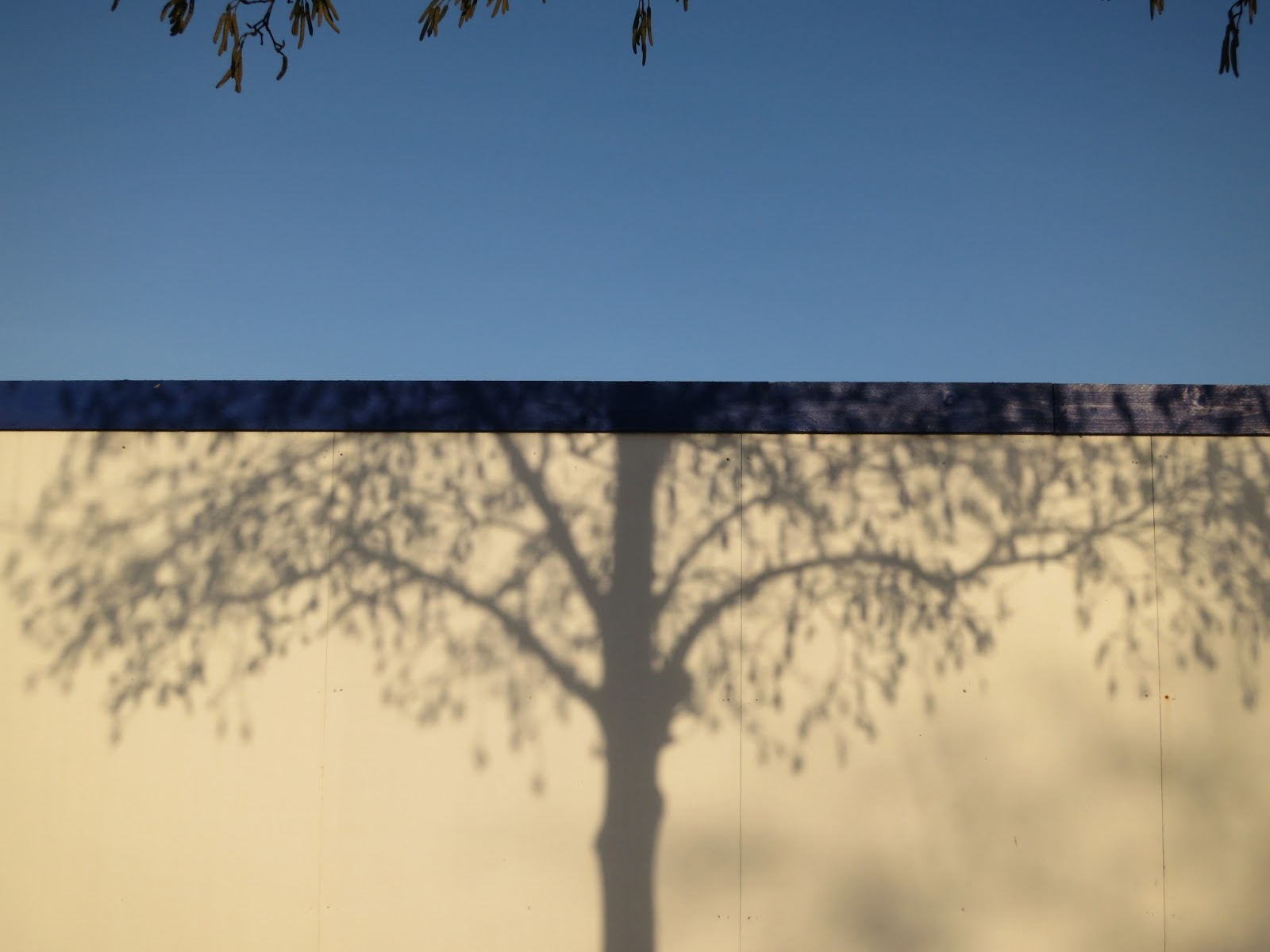 Shadow of the tree on the building site hoarding.