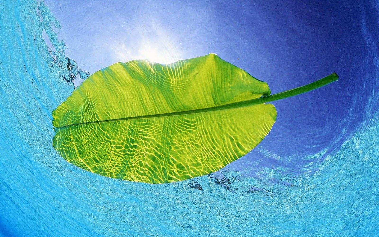Zeewater met groen blad en helder blauw water