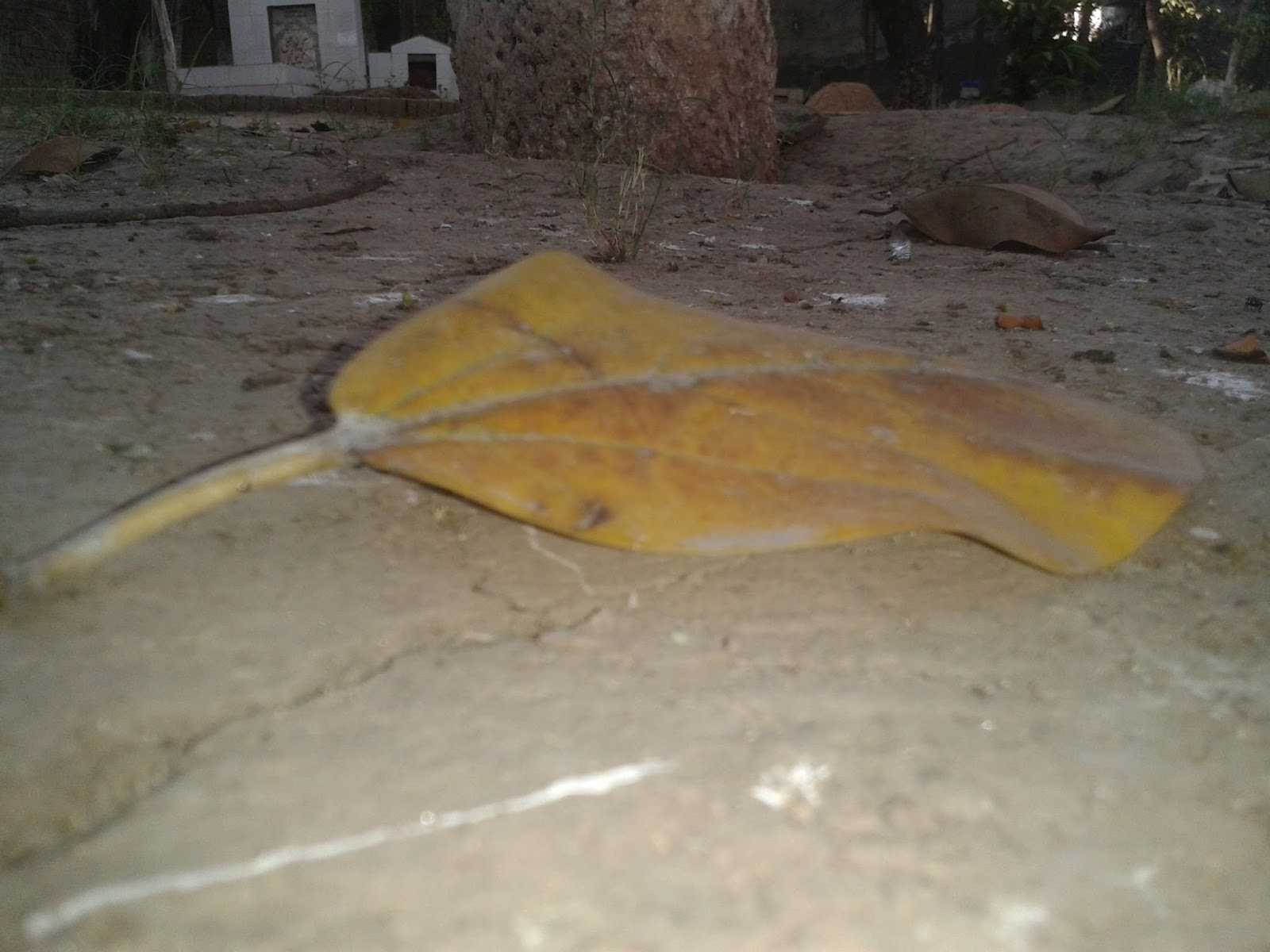shah-shakoor-sialkot-pakistan-tomb-autumn-leave1