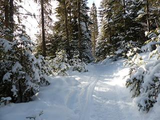 Forêt Montmorency - Québec - Canada