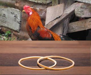 Penyebab dan resiko ayam makan gelang karet