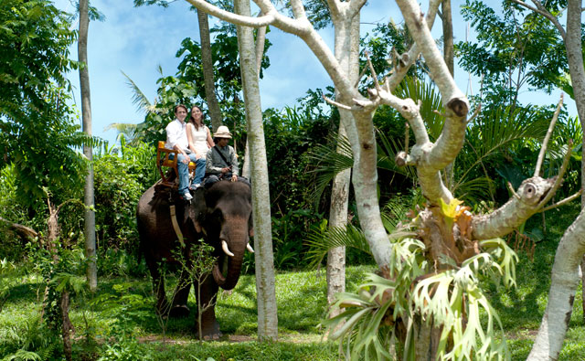 Bali Zoo Park Elephant Back Safari Ride Only - Singapadu, Sukawati, Gianyar, Bali, Holidays, Tours, Attractions, Bali Zoo Park, Packages