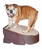 Pet Gear Stramp Stair and Ramp Combination