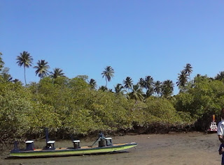 Salgado ou marismas tropicais hipersalinos
