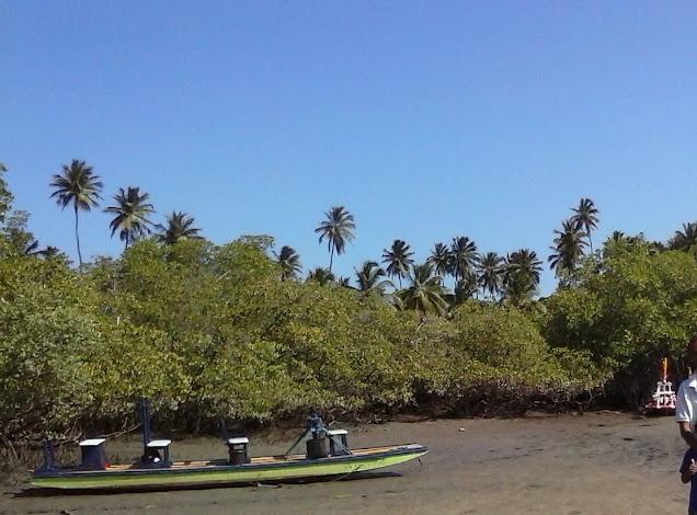 Meio Ambiente Definição:  O que são Salgado ou marismas tropicais hipersalinos?