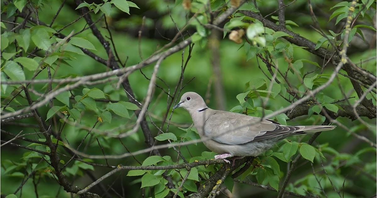 новый птицы краснодарского края фото и описание теряют своей актуальности