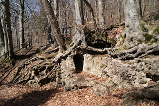 Der Römerkanal verläuft unter dem Wurzelwerk eines Baumes entlang.