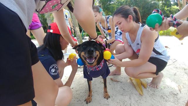 Pet adoption drives Singapore