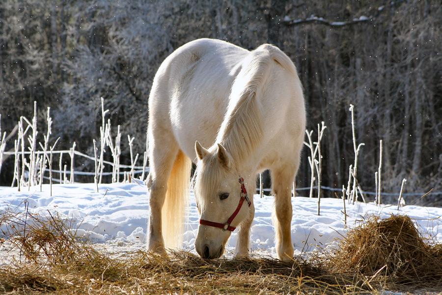 New horse in Kõrgemäe: Thor Printsess!
