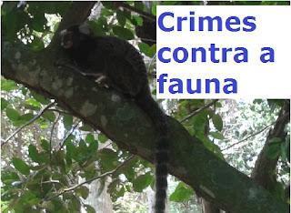 Reserva da Fauna Lei 9.985/00