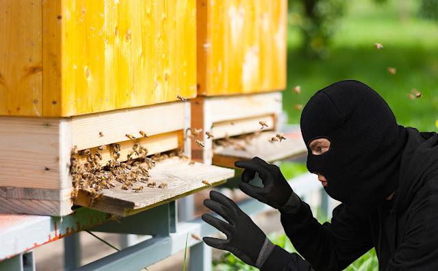Κλοπή μελισσιών στην Ηγουμενίτσα