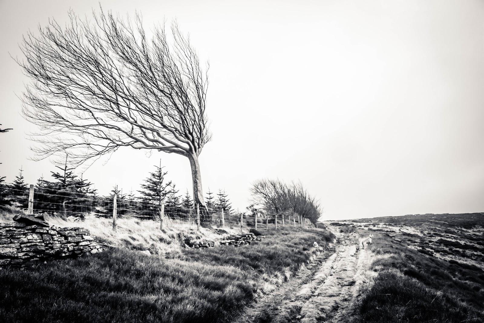 Dungeon Wood: Various Walks Around Here