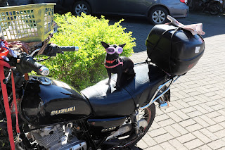 Small dog with goggles in motorcycle basket in Puriscal.