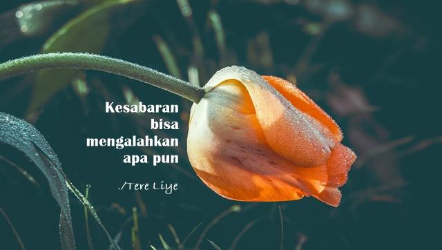 Kumpulan Kata kata Bijak Tere Liye Untuk Inspirasi dan Motivasi