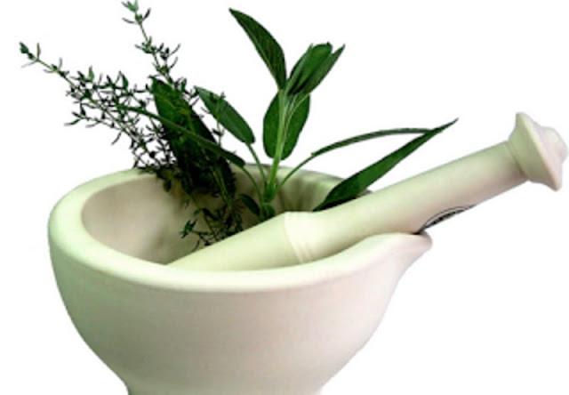 tumbuhan obat herbal paru paru basah