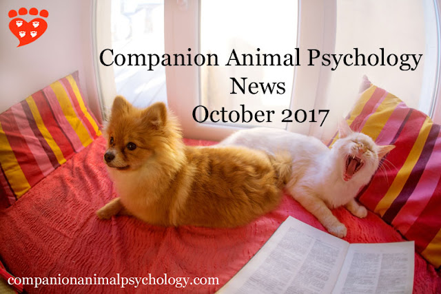 A dog and cat read the latest newsletter from Companion Animal Psychology