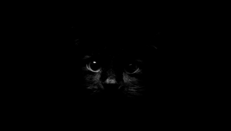 Cat Wallpaper Iphone Tumblr