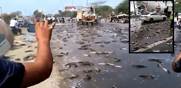 Βροχή ψαριών από τον ουρανό ξανά στο Ιράν, την Κίνα και την Ινδία (Βίντεο)