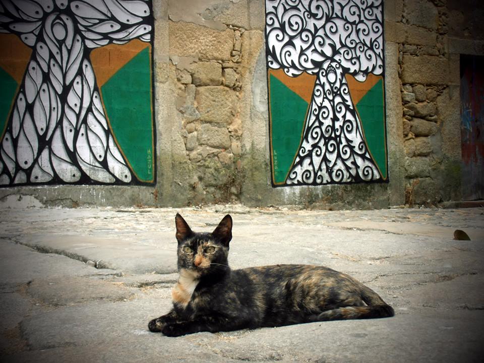 """38189f584 O """"brincante"""" Hazul no seu Facebook, apresenta o curador de sua exposição,  o gato. Paradoxalmente, silencioso, tem olhar observador mas, produz uma  visão """" ..."""