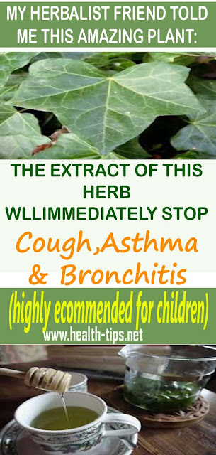 English Ivy – Natural Remedy For Cough, Bronchitis & Asthma#NATURALREMEDIES