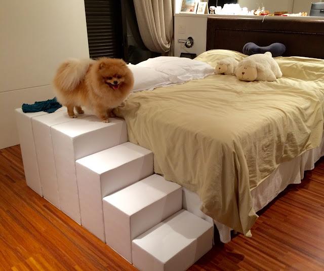 rampas camas altas para cães