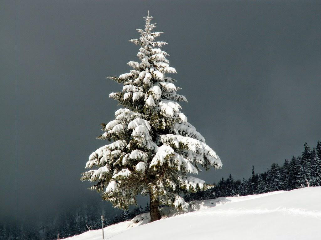 Tannenarten Weihnachtsbaum.Der Streuselsturm Geordnetes Chaos Weihnachtsbaum Gekauft Vs