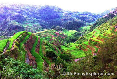 Banaue rice terraces ifugao, little pinay explorer, best travel destinations in PH, when in PH, rice plants, philippines