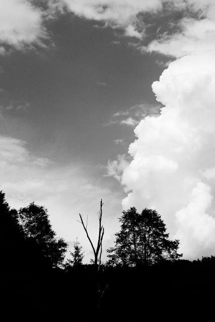 Dwa drzewa. Koncepcyjna fotografia krajobrazu. Nad brzegiem Dunajca. Pieniny. fot. Łukasz Cyrus