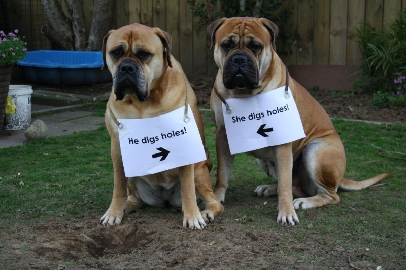 Dog Shaming Collection Funny Joke Pictures