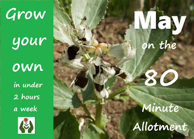 Grow your own May Update 80 Minute Allotment Green Fingered Blog