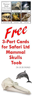 FREE 3-Part Cards for Safari Ltd Mammals Skulls from In Our Pond
