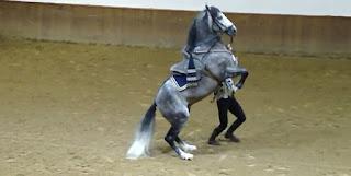 El caballo cartujano