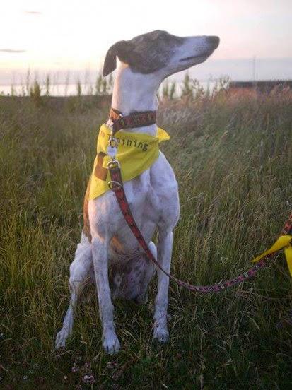 Perro con pañuelo amarrillo