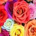 Sevgiliye 7 Kıtalık Gülüm Aşk Şiiri