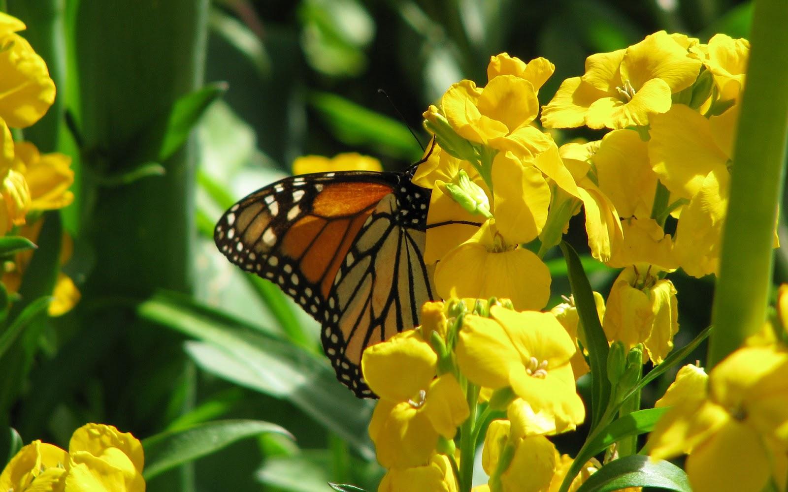 Wallpaper met een vlinder en gele bloemen.