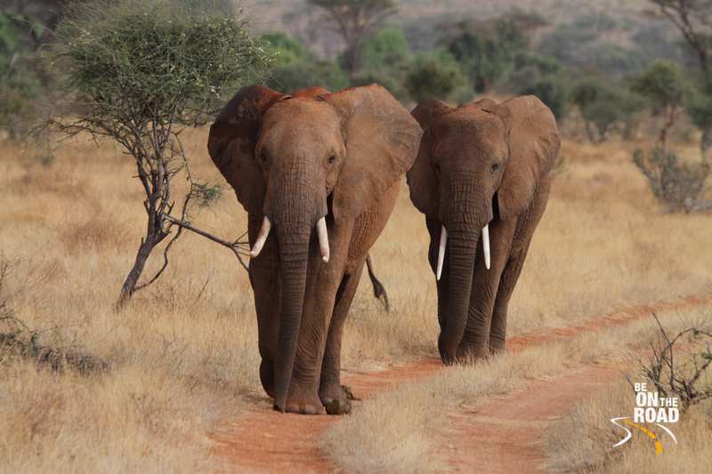 An Elephant March in Africa