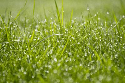 Kumpulan Puisi Bertema Cinta Tentang Hujan Di Musim Kemarau