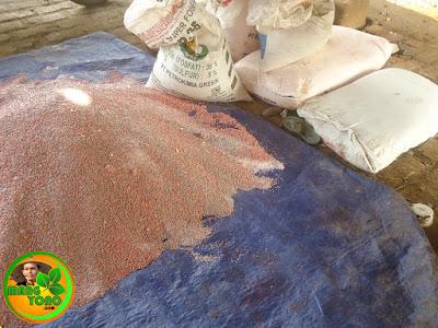 Pupuk kimia untuk tanaman padi: Urea TSP, KCL