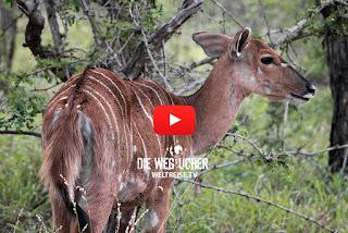 Afrika Antilopen essen, Fleischfresser, Weltreise, Die Wegsucher Arkadij und Katja aus Bremerhaven