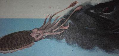 Sepia arrojando tinta a su perseguidor