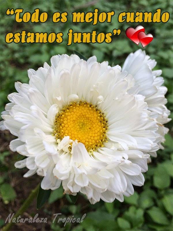 Frase de amor con flor extrañarosa