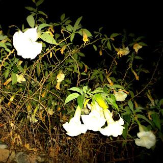 Flores Vistas em Caminhada Noturna pelas Ruas de Ollantaytambo