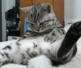 Cara Menghilangkan Kutu Kucing di Rumah