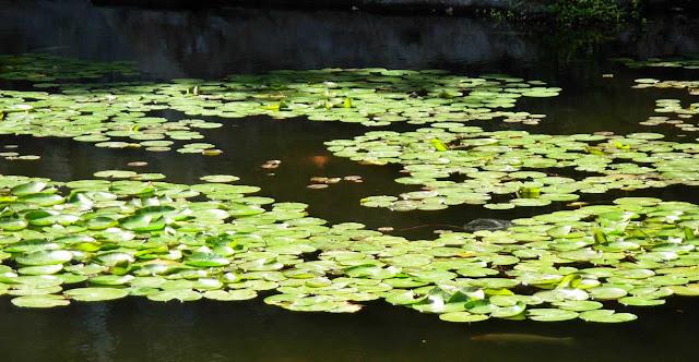 Plantas acuaticas y biologia